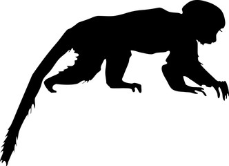 332x240 Search Photos Silhouette Of Monkey