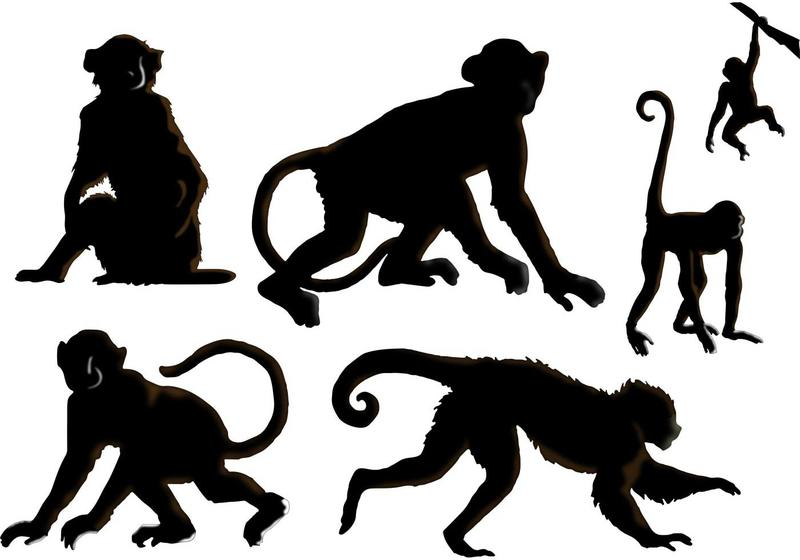 800x560 The Monkey Vectors