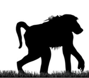 300x262 Baboon Action Group