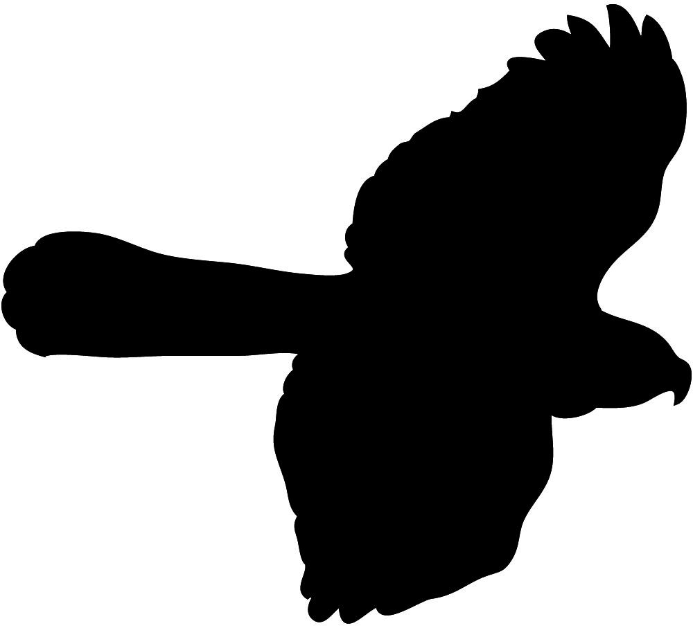 1000x907 Hawk Clip Art Baby Boy Clip Art In Image