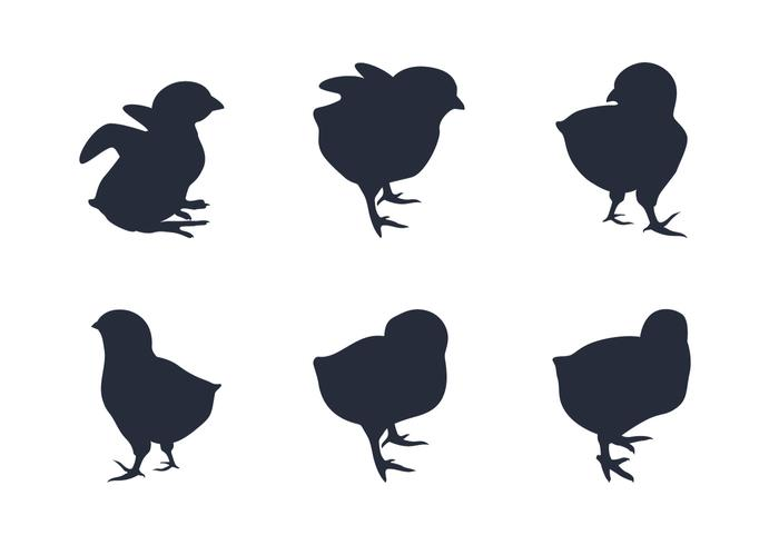 700x490 Baby Chick Free Vector Art