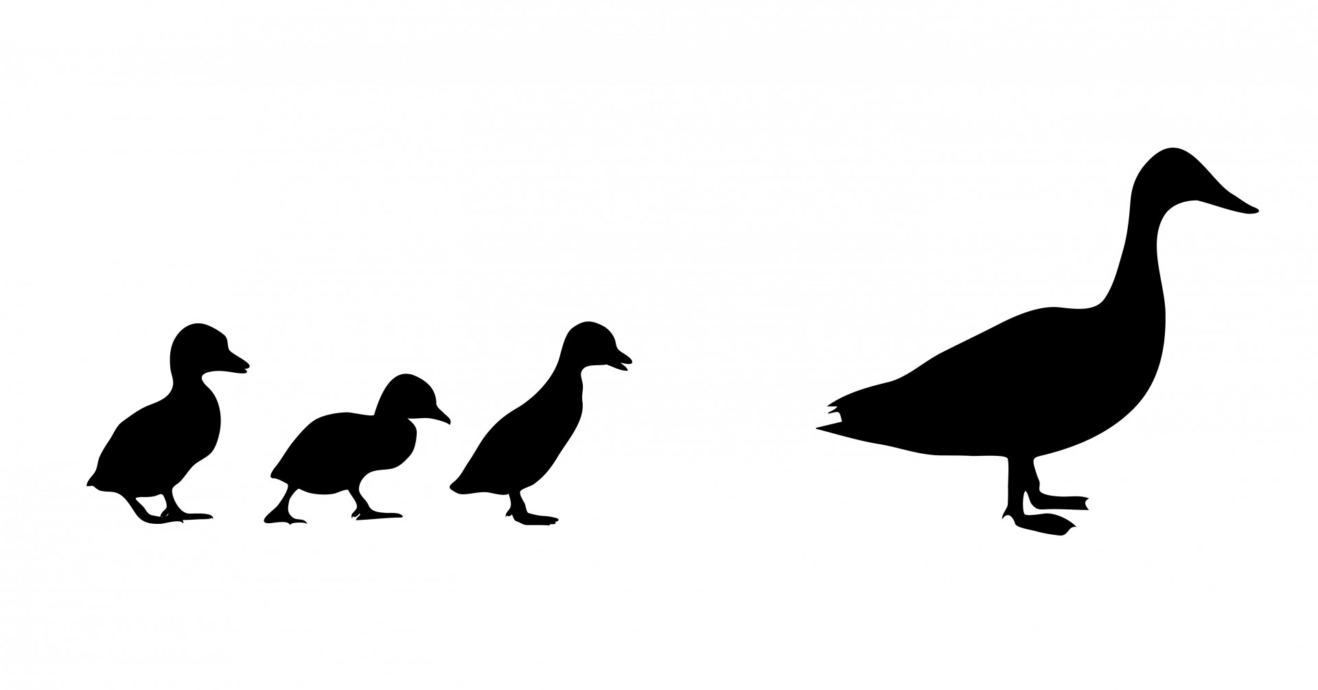 1920x1005 Duck Amp Ducklings Silhouette Free Stock Photo