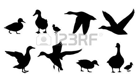 450x257 Baby Goose Duck Silhouettes On The White Background Tattoo