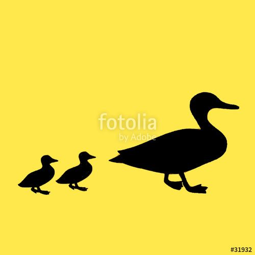 500x500 Mother And Two Baby Ducks Stock Photo And Royalty Free Images