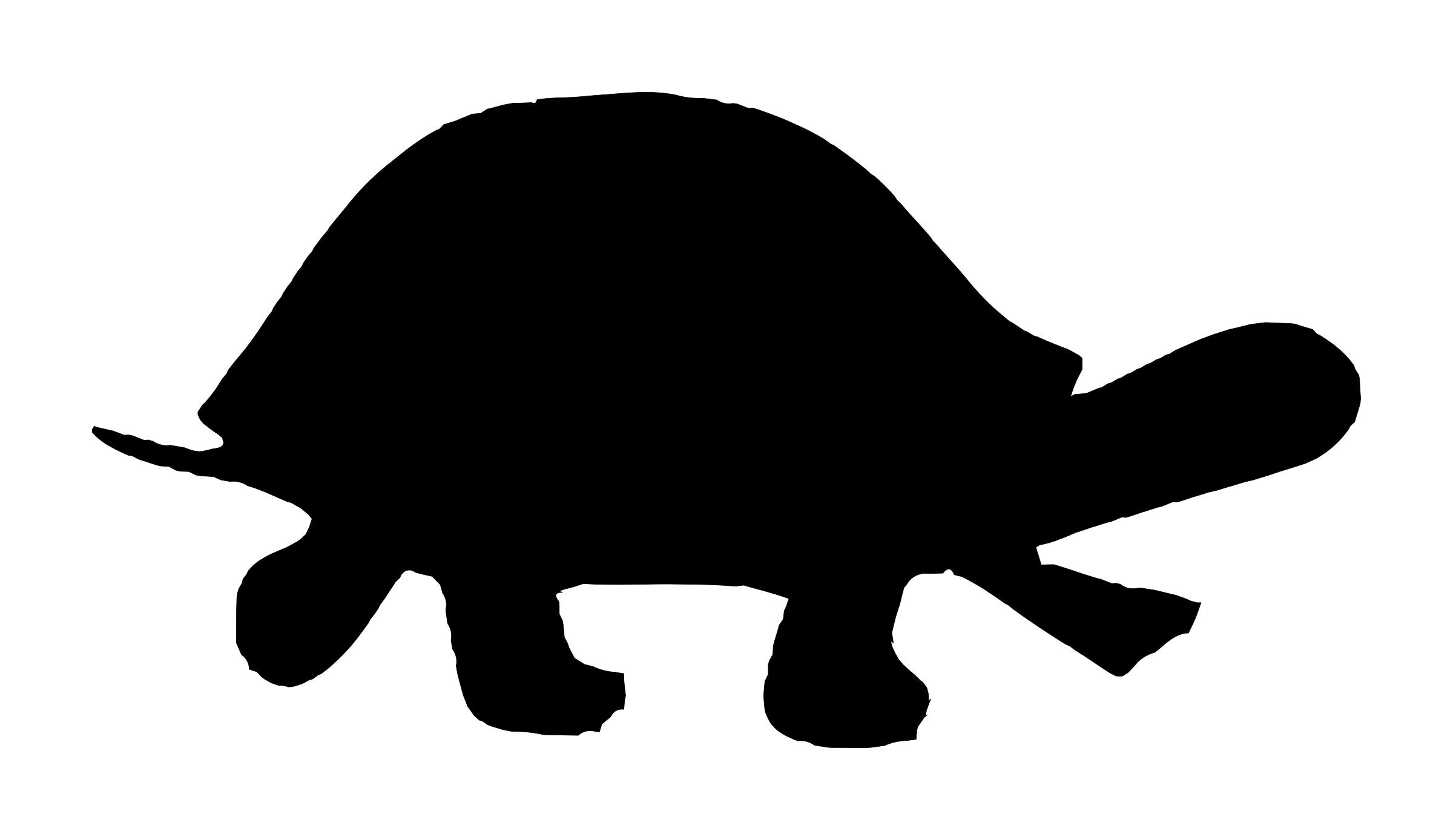 2400x1388 Free Turtle Icons Png, Turtle Images
