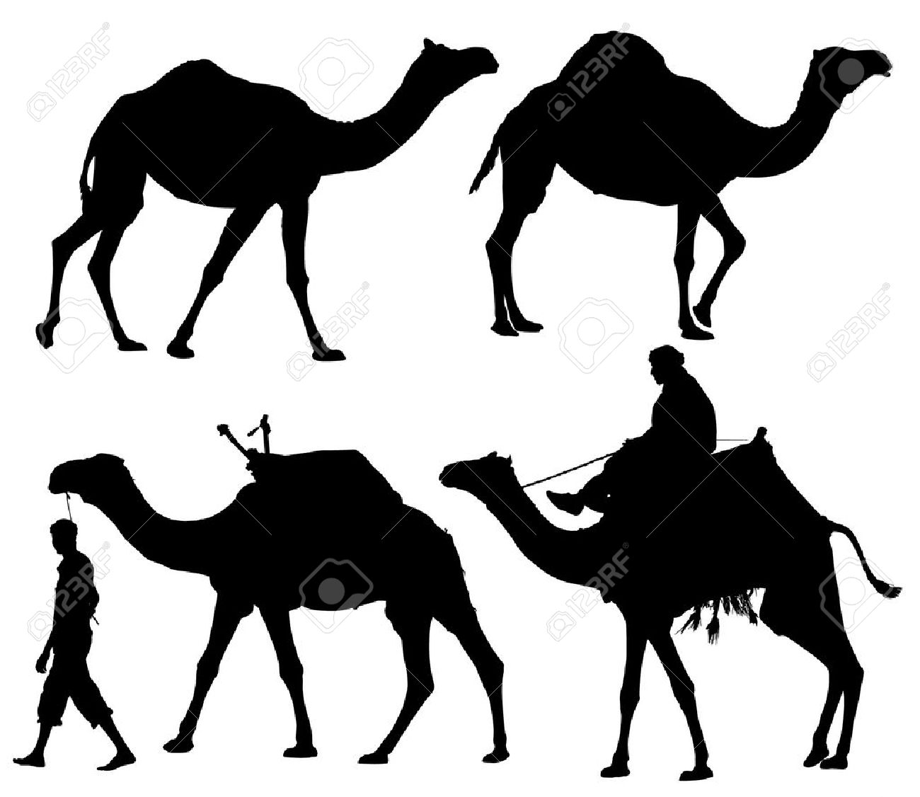1300x1126 Camel Silhouette On White Background Royalty Free Cliparts
