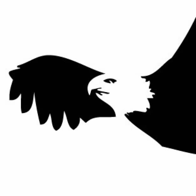 626x626 Flying Bald Eagle Silhouette With White Head In Side View