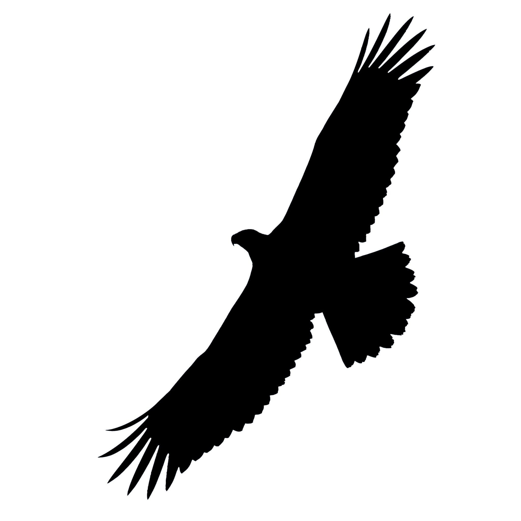 2048x2048 Bald Eagle Silhouette