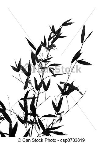 337x470 Bamboo Tree And Branches.