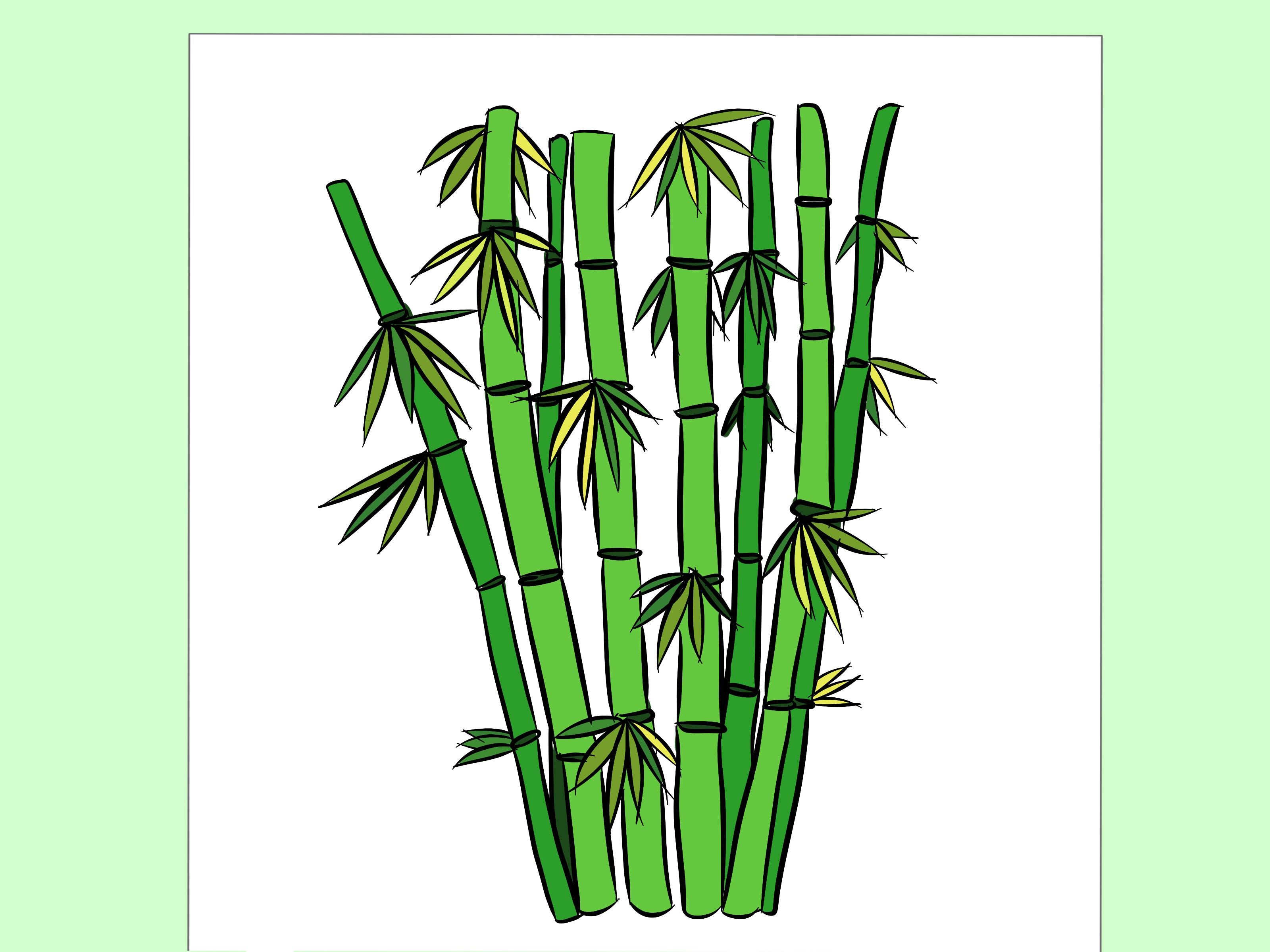 3200x2400 Drawn Bamboo