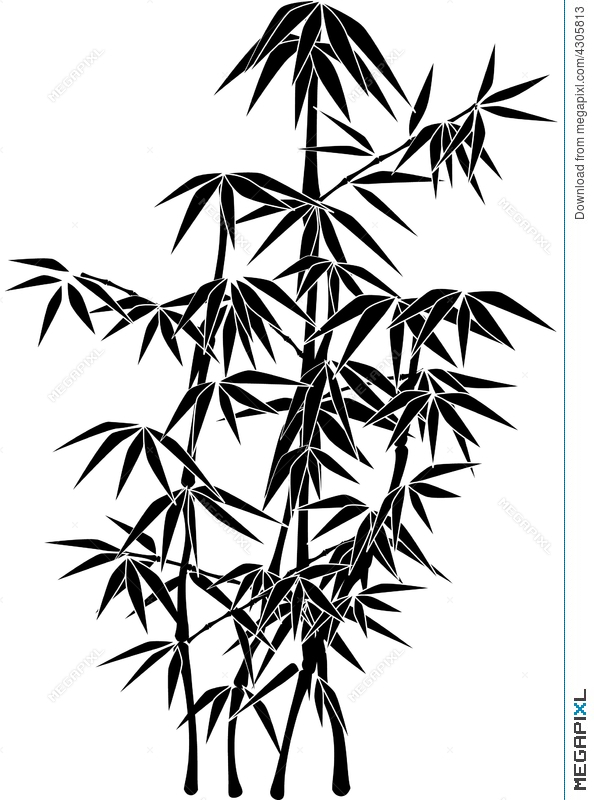 594x800 Giant Bamboo Plant Silhouette Illustration 4305813