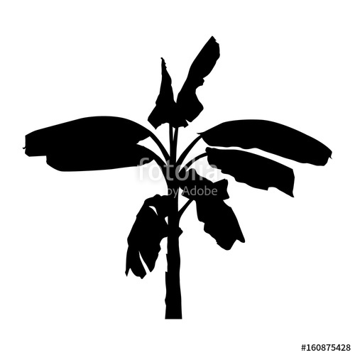 500x500 Realistic Banana Tree, Silhouette Black Plant Illustration, Vector