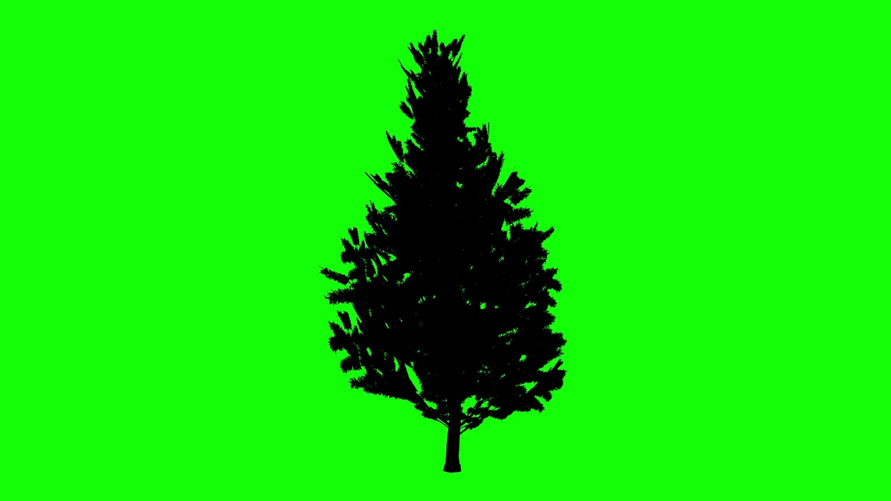 1280x720 Free Hd Video Backgrounds Animated Scotch Pine Tree Silhouette