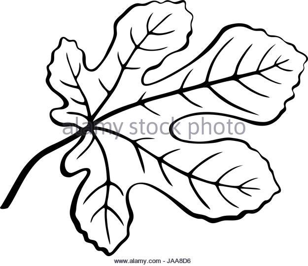 625x540 Fig Tree Silhouette Stock Photos Amp Fig Tree Silhouette Stock