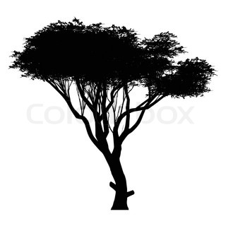 320x320 This An Linden Tree Silhouette Stock Vector Colourbox