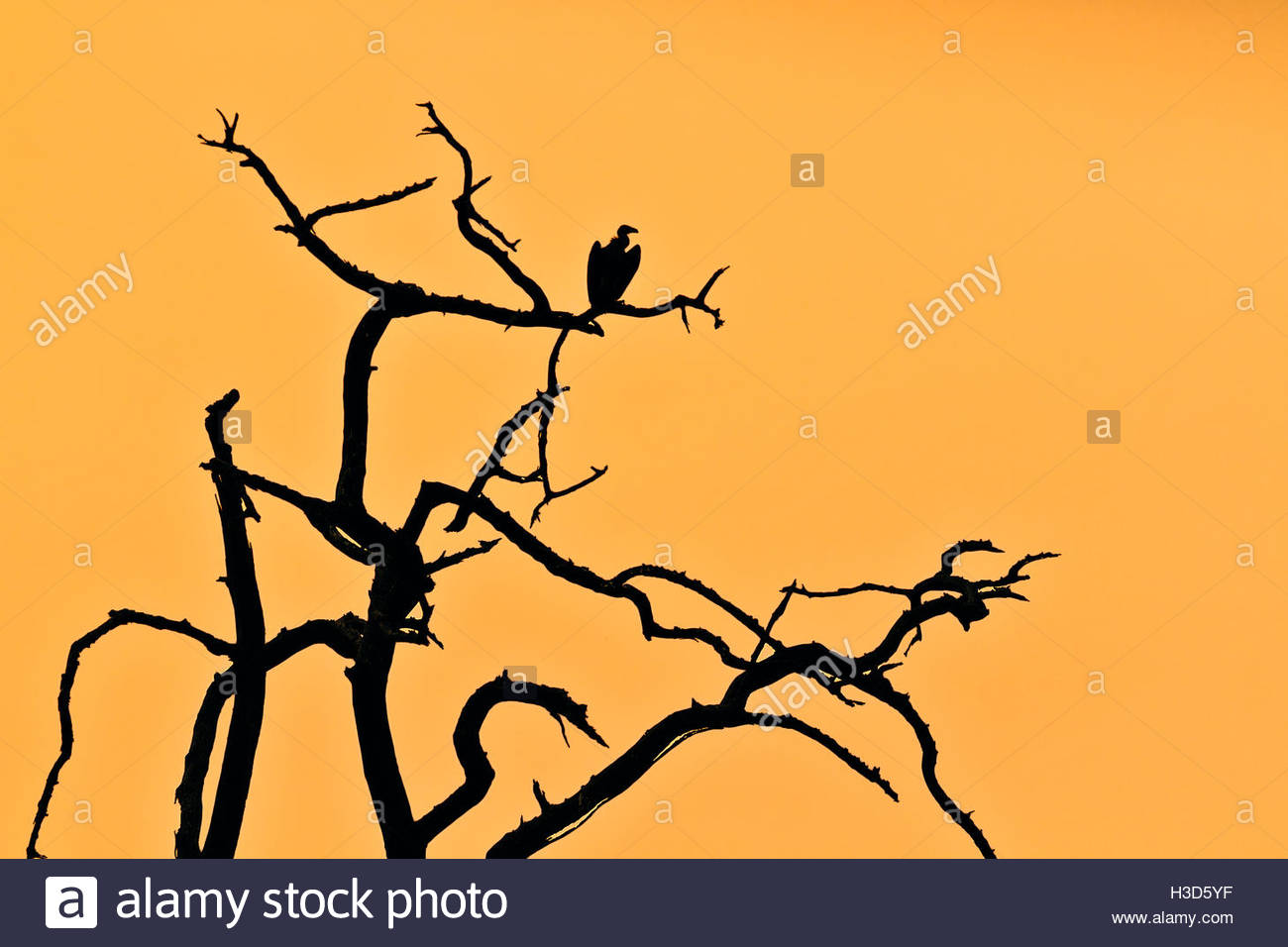 1300x956 African Tree Silhouette Stock Photos Amp African Tree Silhouette
