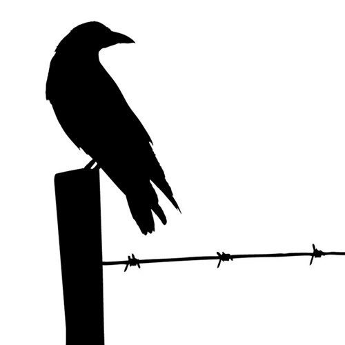 500x500 Birds On Barbed Wire Silhouette