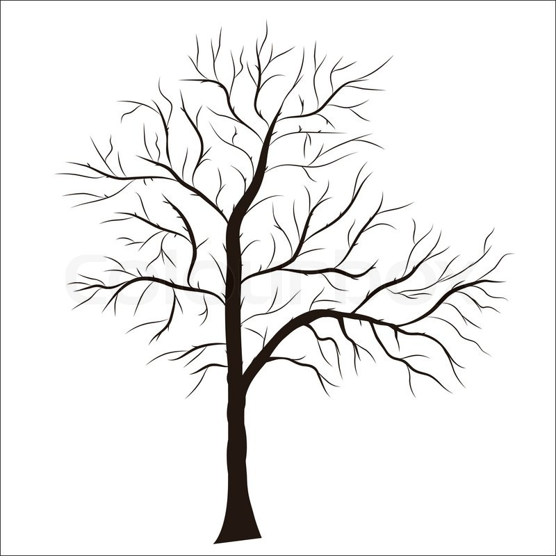 800x800 Best Photos Of Bare Tree Silhouette Clip Art