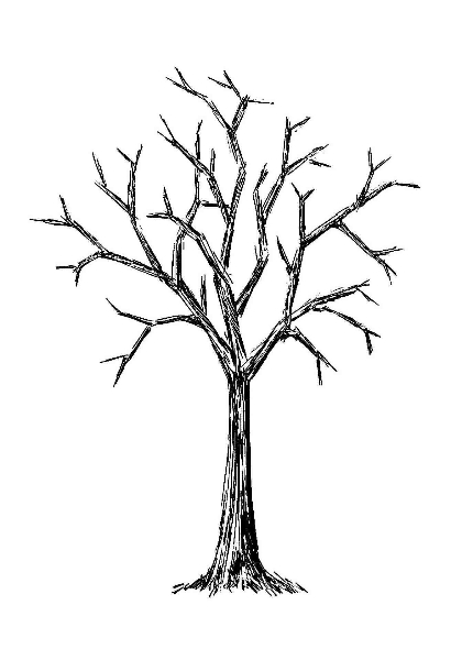 420x600 Leafless Tree Drawing Bare Tree Silhouette Stock Images Royalty