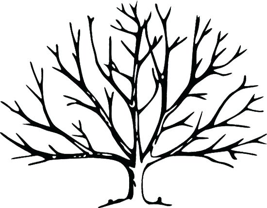 550x430 Printable Tree Without Leaves Coloring Page Trees Printable Tree