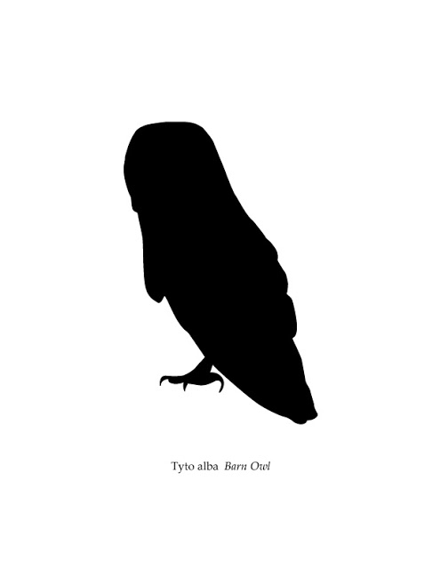 495x640 Images Of Barn Owl Silhouette