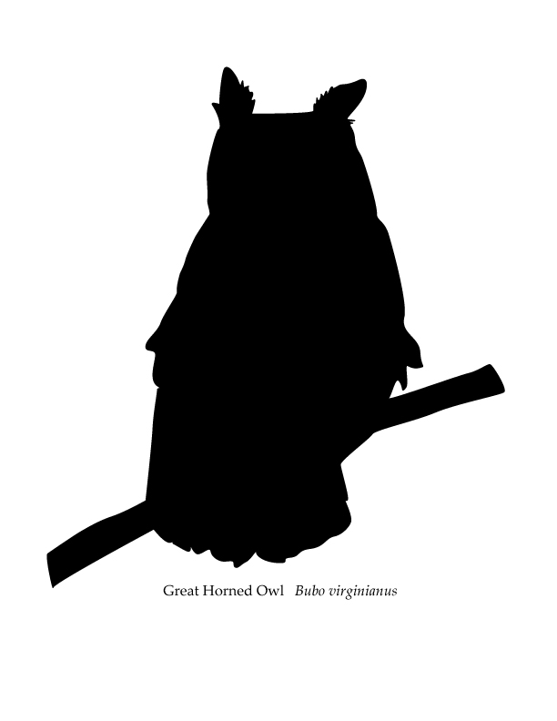 612x792 Owl Silhouette Project