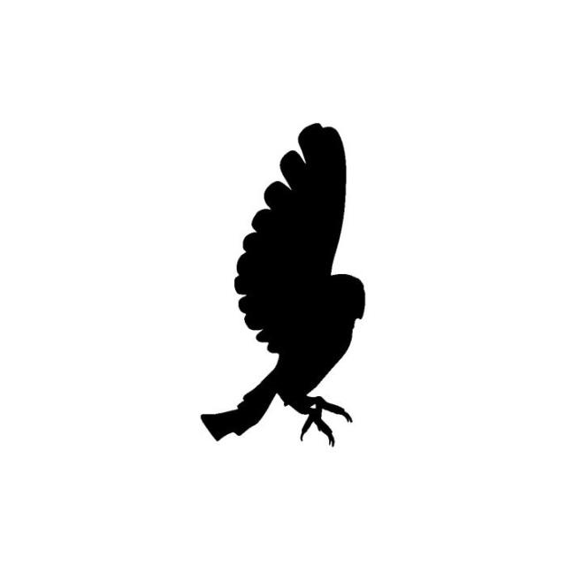 640x640 Barn Owl 4