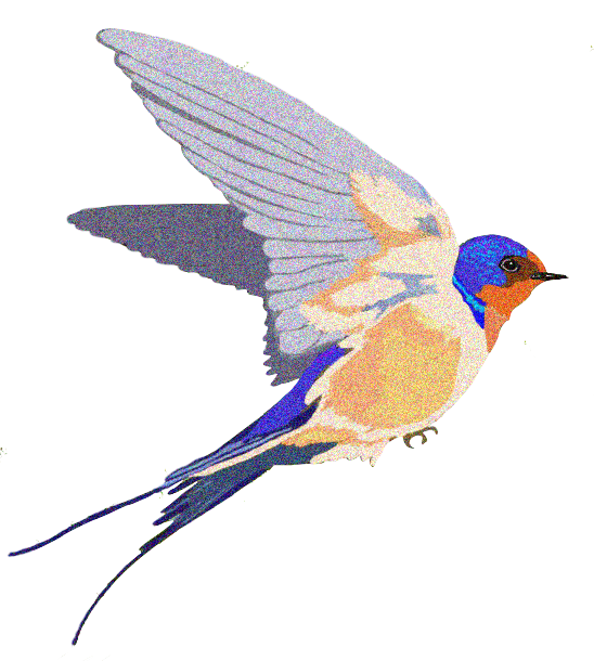 548x610 Barn Swallow Background Png Png Mart