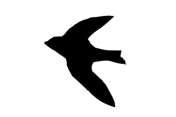 600x400 Tree Swallow Silhouette Tattoos Tree Swallow