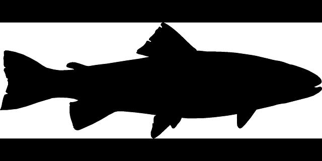640x320 Best Fishing Silhouette