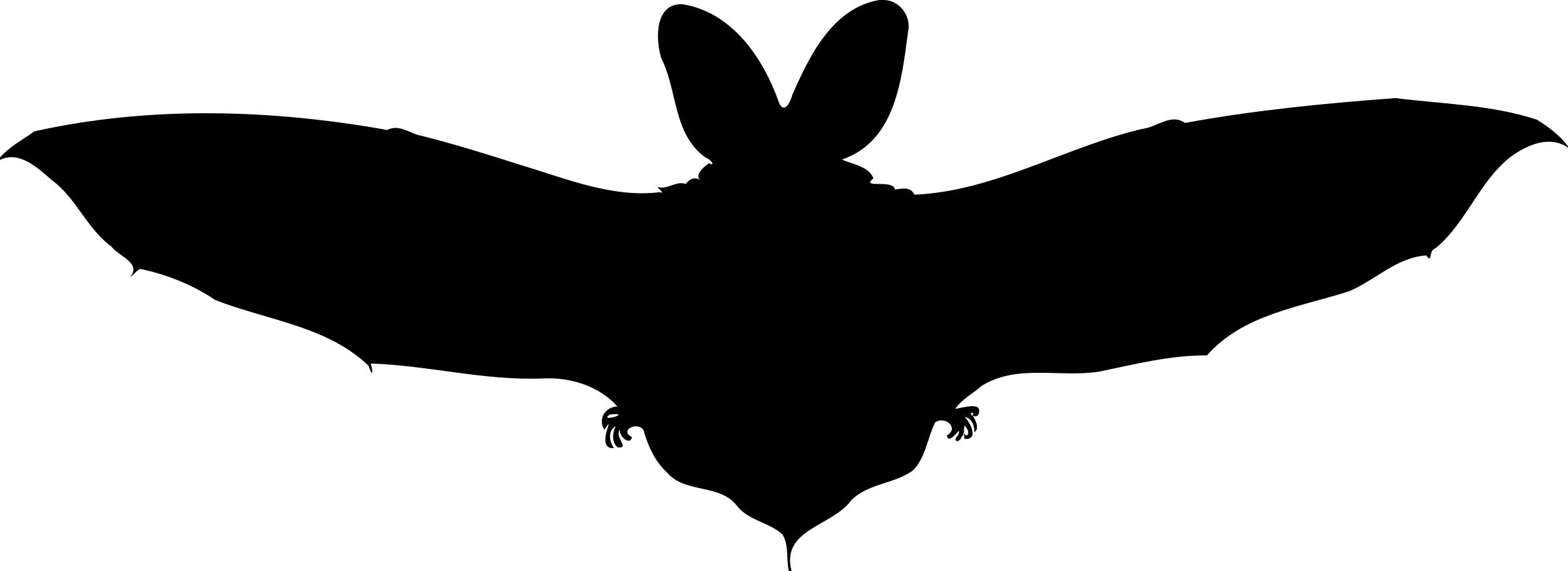 2400x873 Brown Long Eared Bat Silhouette Icons Png