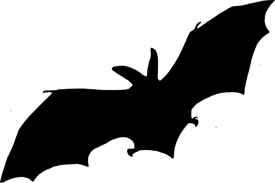 543x361 Bat Silhouette Multi Bat And Spider Templates Halloween