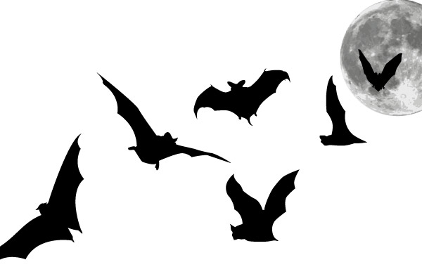 600x380 Bats And Full Moon Vector, Free Vector Images