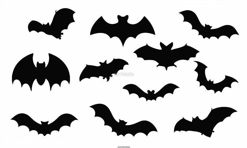 800x480 Bat Silhouette, Set Vector Animals Icons Poster Bat Silhouette