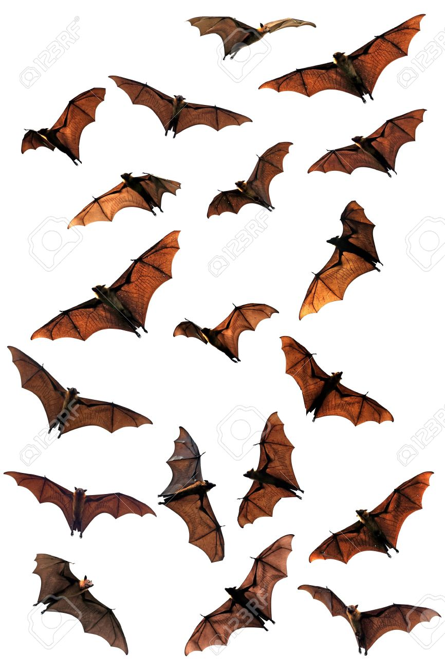 866x1300 Bats A History Of Hearing Wildlife Weekly