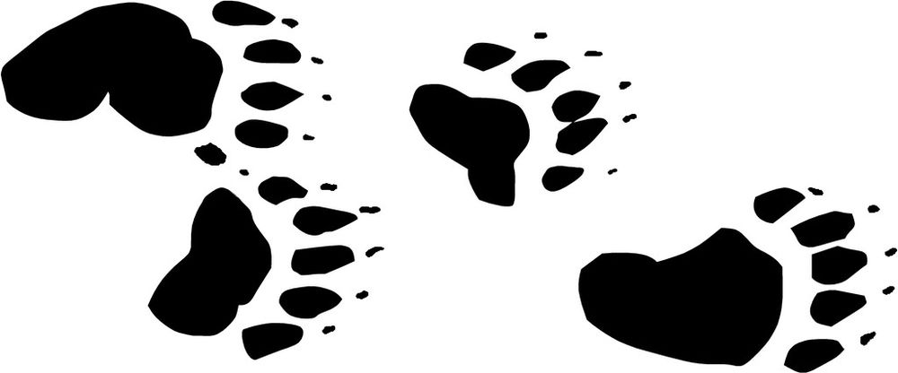 1000x416 Black Bear Clipart Bear Tracks