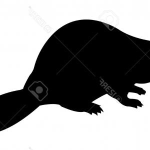 300x300 Photovector Silhouette Beaver On White Background Createmepink