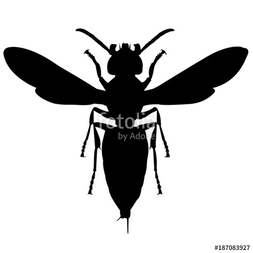 500x500 Wasp Silhouette Vector Graphics Stock Image And Royalty Free