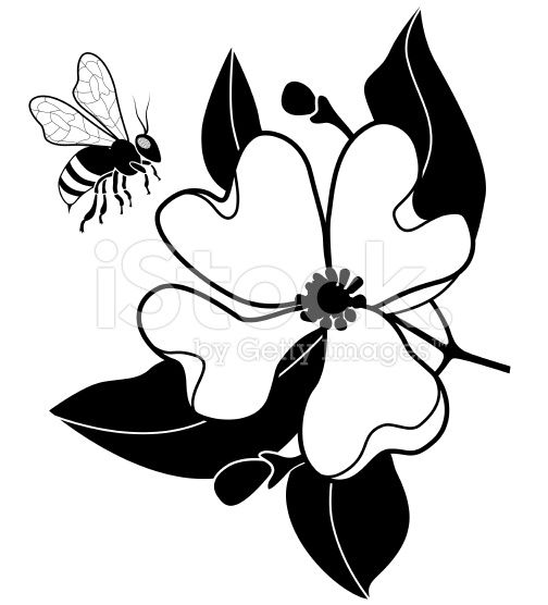 504x556 A Vector Illustration Of A Honey Bee Pollinating Dogwood Flower