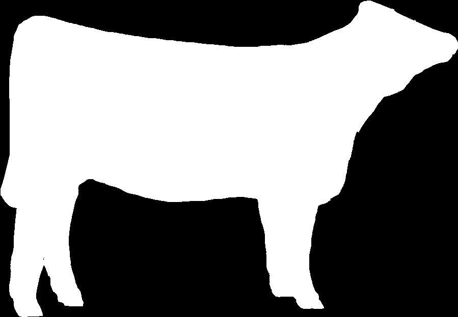 899x623 Beef Cattle Breed Identification 5 Kentucky 4 H Livestock
