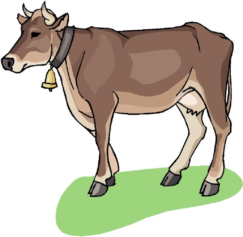 800x781 Beef Cattle Clip Art Related Images