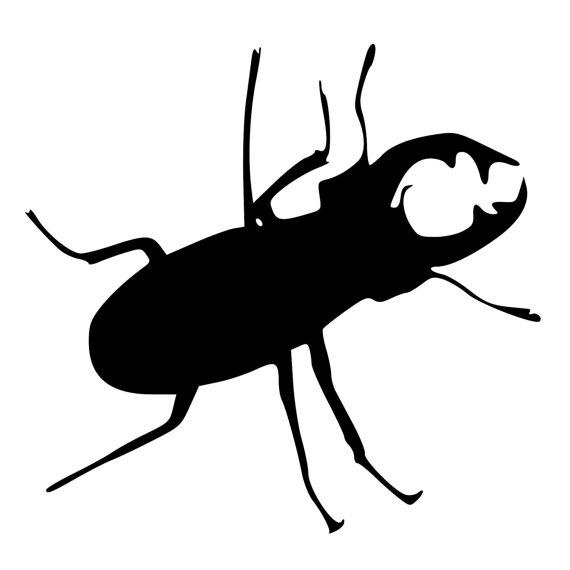 570x570 Beetle Silhouette Meinafrikanischemangotabletten