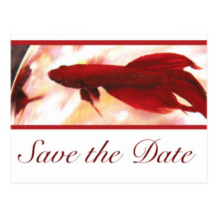 307x307 Red Betta Fish Cards