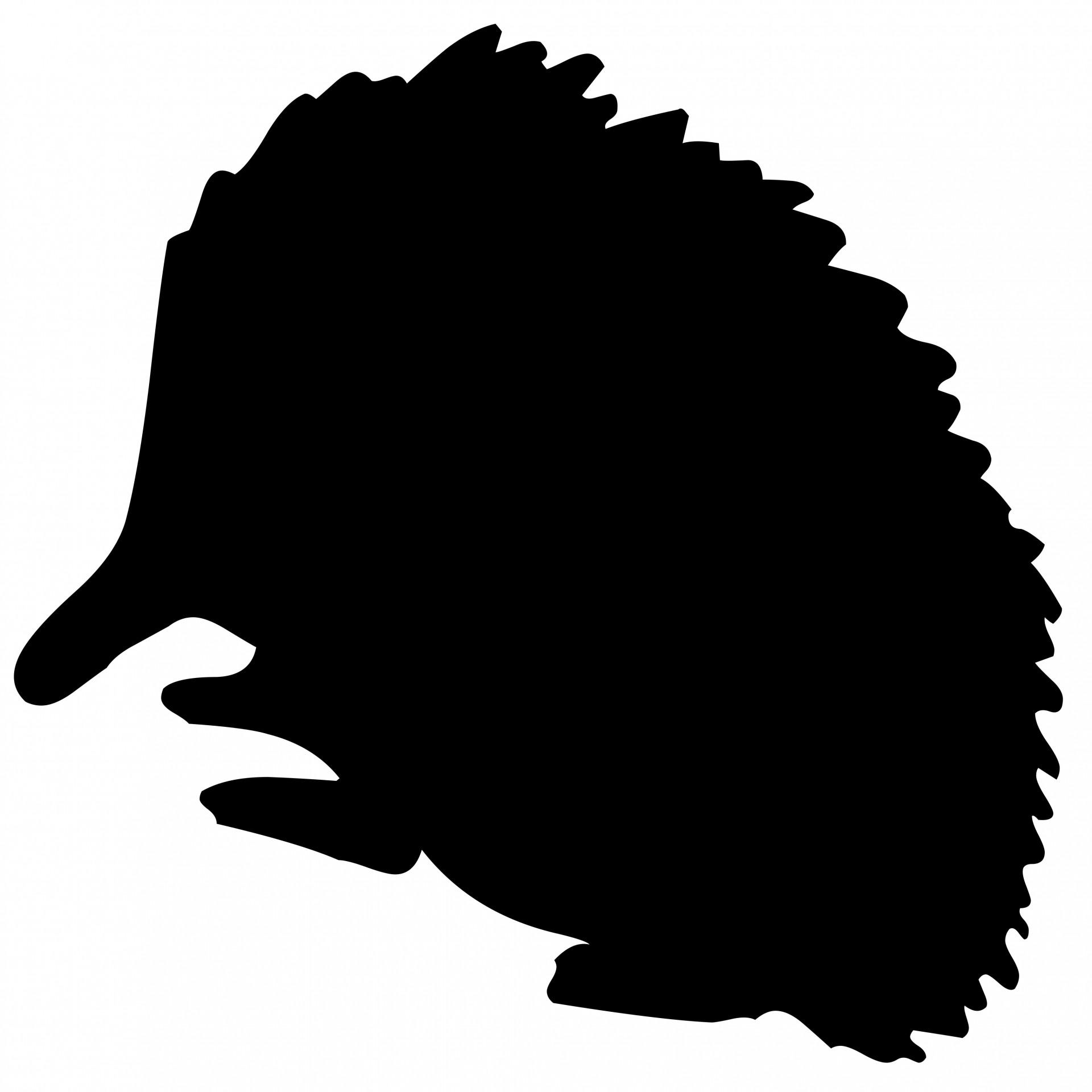 1920x1920 Hedgehog Free Stock Photo