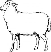 180x182 Bighorn Sheep Clip Art, Free Vector Bighorn Sheep