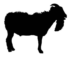 300x240 Billy Goat Royalty Free Photos And Vectors