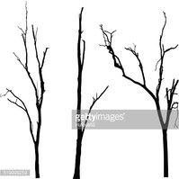 199x199 Vector Black Silhouette Of A Bare Tree Stock Vectors
