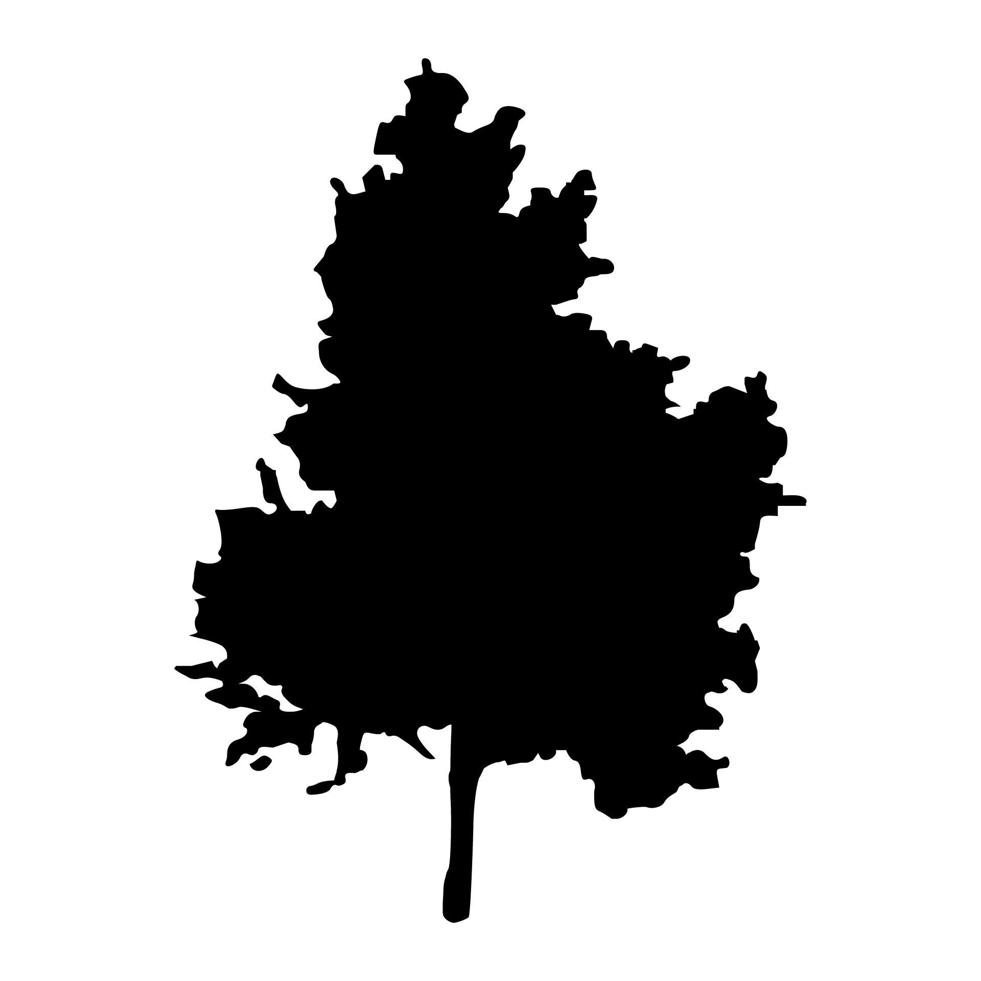 1920x1920 Birch Tree Free Stock Photo