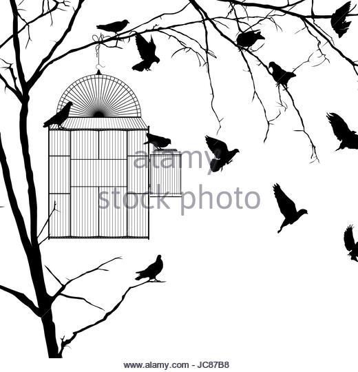 520x540 Bird Cage Black And White Stock Photos Amp Images