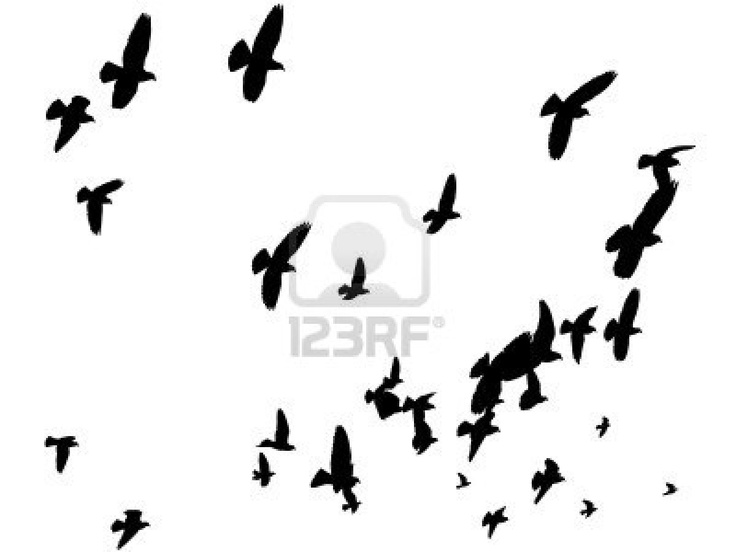 736x552 51 Best Silhouettes Images On Birds In Flight
